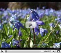 Videos aus Linden