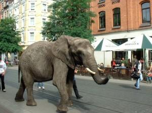 Elefant auf der Limmerstraße