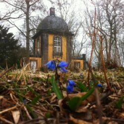 Erste Scilla auf dem Lindener Bergfriedhof