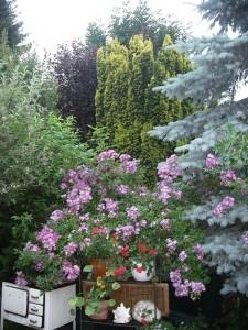 Gartenpracht auf dem Lindener Berg