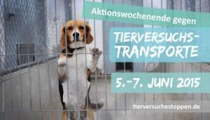 Aktionswochenende: Tierversuche und Transporte stoppen