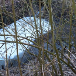 Wasserverschmutzung an der Fösse