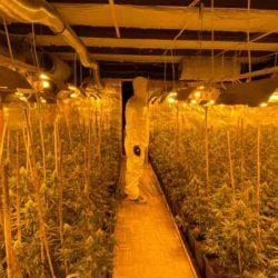 Marihuana im Wert von 500.000 Euro